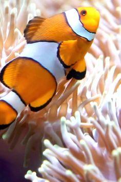 Underwater Animals, Underwater World, Georgia Aquarium, Aquarium Fish, Great Big Sea, Amazing Animal Pictures, Tropical Freshwater Fish, Beautiful Sea Creatures, Salt Water Fish
