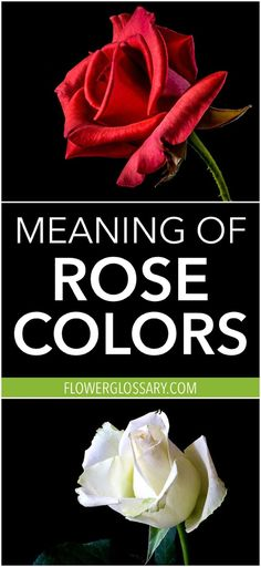 All rose colors have different meanings. Have you ever wondered what message you are sending by giving someone red roses, or pink? This is a helpful list of the color meaning of roses! #rosecolor #colormeanings #roses #flowerglossary #flowercolors