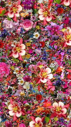 Nature Iphone Wallpaper Ideas : Nature wallpaper iPhone flowers