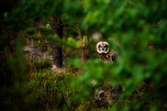 1X - in the young forest by Richard Lindberg