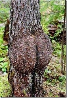 Oh Bum - incredible trees