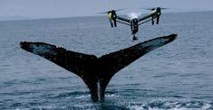 NASA utilizará drones con inteligencia artificial para monitorizar el estado de nuestros océanos - https://www.hwlibre.com/nasa-utilizara-drones-inteligencia-artificial-monitorizar-estado-oceanos/