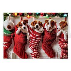 Smiling Animals, Fluffy Animals, Cute Animals, Christmas Animals, Christmas Cards, Christmas Dog, Dog Muzzle, Animals Amazing, Training Your Dog