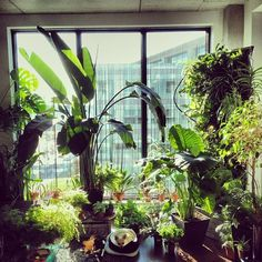 Who needs curtains when you can have plants? Also, can you spot the cutest #jungleanimals ?   :@kevencaron #urbanjunglebloggers
