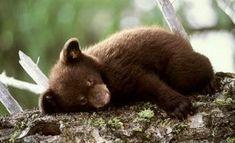 Mese - Miért alszik a medve télen? - Népmese | Mese @