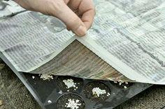Tout simple pour réussir les semis, la feuille de papier journal pour maintenir le terreau humide lorsque vous arrosez sans perturber la répartition des graines.