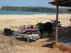 Goa Beach Guide Goa Travel, It's All Happening, Goa India, Beach Tops, Destin Beach, Free Things To Do, Feel Tired, Ibiza, Australia