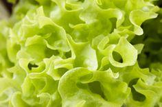 So bleibt Dein Blattsalat frisch...