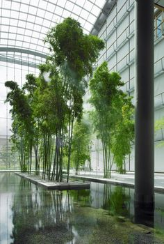 horticultural, trees, glazing, lobby, reflect