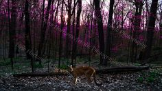 Early Morning in Dogwood Forest