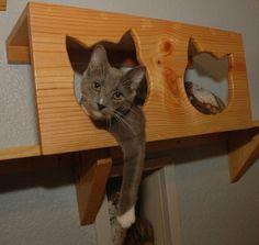 The Cat Carpenter Climbing Shelves