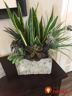 Beauty Succulents Pots Arrangement Tips 39 « Garden Decor Succulent Gardening, Container Gardening Vegetables, Succulents In Containers, Succulent Pots, Container Plants, Planting Succulents, Garden Plants, Indoor Plants, Planting Flowers