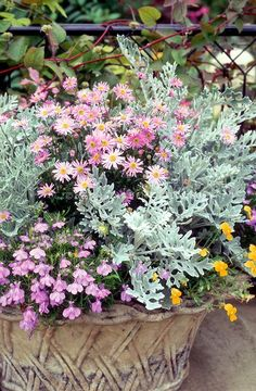 Aster, Lobelia, Tanasetum dusty miller, Viola, touch of yellow gold Container Flowers, Flower Planters, Container Plants, Container Gardening, Flower Pots, Flower Ideas, Autumn Flowering Plants, Fall Plants, Foliage Plants