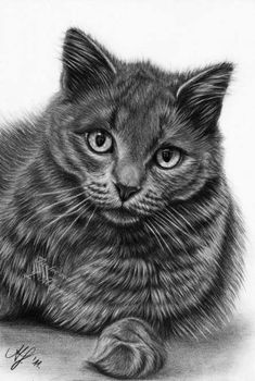 25 Beautiful Cat Drawings from top artists around the world Kitty Drawing, Tattoo Coloring Book, Walpaper Black, White Prints, Diabetic Dog, Rock Pools, Cute Owl, Top Artists, Dog Snacks