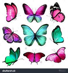 Nine Turquoise Pink Butterflies On White Background Стоковые фотографии 358341185 : Shutterstock