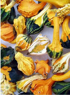 "Anthony Windram, a Brit who landed in the US because of marriage, cannot quite grasp the affinity Americans have for ""decorative gourds"" this time of year -- he thinks they look like morbid curiosities!"