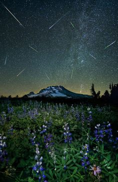 Flowers and stars and meteors for M'Lady Fair!  The Perseid meteor shower over Mt. Hood…