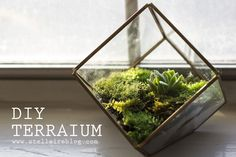 What It Means To Decorate with Terrariums – Key Tips And Details Terrarium Diy, Terrarium Containers, Green Zone, House Plants, Home Projects, Perfect Place, Diy Home Decor, Indoor, Crafty