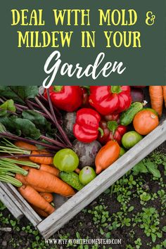 Having trouble with mold & mildew in your vegetable garden this spring? Learn how to deal with mold & mildew on your vegetable plants for a productive garden. Starting A Vegetable Garden, Vegetable Garden For Beginners, Backyard Vegetable Gardens, Gardening For Beginners, Gardening Tips, Planting Vegetables, Growing Vegetables, Organic Mulch, Victory Garden