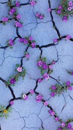 Lockscreens | Flowers lockscreens   Like or reblog if you save...