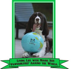 Maggie is read around the world. In over 87+ countries & on 6 continents. Follow us at www.MaggieMooseTracks.com WOOF WOOF