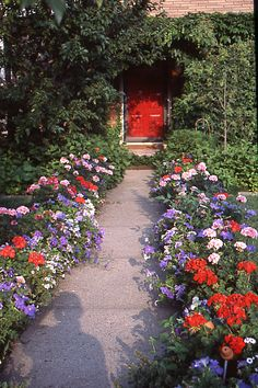 """Try Raised Beds—and Color by Elvin McDonald who bordered his frontwalk with raised beds filled with red geraniums and blue petunias and painted the front door in lipstick red to get the """"full stop"""" effect. #Gardens #Color"""