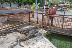 Onlookers wait for a sign of movement at the Atagawa Tropical & Alligator Garden. Atagawa's heyday as a stylish hot-spring resort has long passed, but this quiet spa town still retains a particular southern charm.