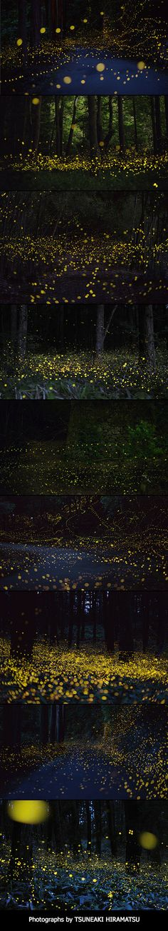 These 9 Images Aren't Computer-Generated, Just Long-Exposure Photos of Fireflies