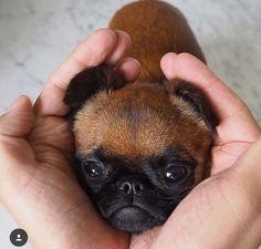 Handful of cuteness