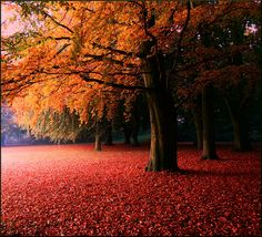 The story of October by Marie Granelli, via Flickr