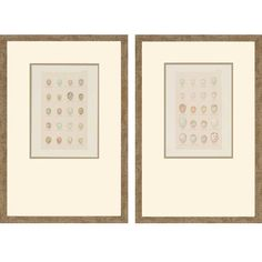 Found it at Wayfair - Egg Study by Seebohm 2 Piece Framed Graphic Art Set