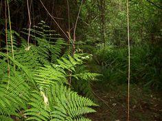Pine tree forest (2304x1728, tree, forest)  via www.allwallpaper.in