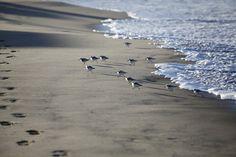 pajaro dunes Beautiful Vacation Spots, Monterey Bay, Best Vacations, Travel Ideas, Outdoors, Earth, Fun, Animals, Image