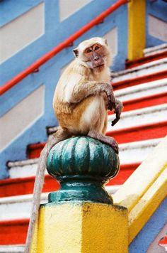 Monkey. Image by Edson Carvalho Jr. #beautifulworld http://www.lonelyplanet.com/photocomp?lpaffil=soc_pi_p_o_bw