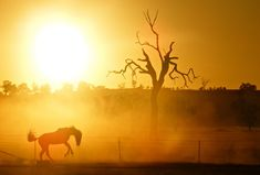A horse rearing on an outback property in Wagga Wagga, NSW #travel #rural #australia