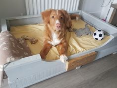 Wonderful DIY Dog bed made from reclaimed wood. Finished in 2735 Light Grey Country Colour.