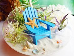 ♥´¨) ¸.•´ ¸.•*´¨)¸.•*¨) (¸.•´ (¸.•`♥~This one is so AMAZING! So beachy!!! Great, fun accent piece! Perfect centerpiece for a coffee table or even an office accent piece. So many great shells and starfish with Stricta Hardleaf Air Plant and Tillandsia Air Plant plus 2 Plagiotropica Purple Air plants. Includes a cute little crab in the sand. This Glass Bowl Terrarium measures approximately 10 in diameter and 3 tall. These plants are so great. No soil needed and just need a little soaking w... Fish Centerpiece, Plant Centerpieces, Centrepieces, Beach Fairy Garden, Fairy Garden Plants, Fairy Gardens, Air Plant Terrarium, Garden Terrarium, Terrarium Ideas