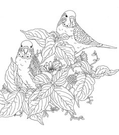 adult nature coloring pages meer dan 1000 afbeeldingen over colorir animais op nature pages adult coloring Coloring Pages Nature, Coloring Pages For Grown Ups, Animal Coloring Pages, Coloring Pages To Print, Coloring Book Pages, Coloring Sheets, Garden Coloring Pages, Illustrator, Garden Illustration