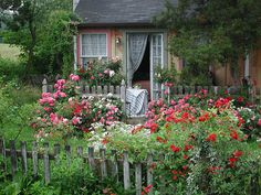 Cottage Garden with Carpet roses
