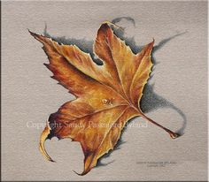 FALL LEAF Canvas Print, Fall Art, Orange Yellow Brown, Ready to Hang, Fall Colors, Prismacolor Pencil Drawing. $28.00, via Etsy.