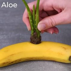 We're rooting for these 12 clever plant hacks! step-up your plant game with the . - We're rooting for these 12 clever plant hacks! step-up your plant game with the plant stand vi - Garden Yard Ideas, Garden Projects, Garden Bed, Garden Table, Garden Planters, Garden Ideas Videos, Ideas For Planters, Garden Hose, Egg Shell Planters