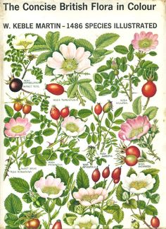 The Concise British Flora in Colour by Rev. W. Keble Martin, first published in 1965, with 1486 botanical species - illustrated.
