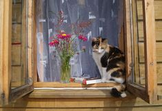 """Cat on the window…"" byLudmila Dubrava"