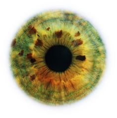 Eyes are the windows to the universe. by Rankin, creative photographer #iris