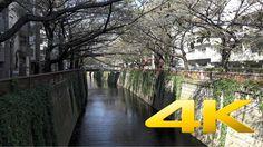 Tokyo Nakameguro - 中目黒 - 4K Ultra HD