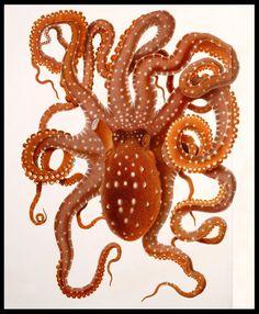 See: bibliodyssey.blogspot.com/2011/08/neapolitan-cephalopods....