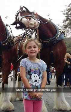 This Clydesdale Horse Already Has The Best Photobomb Of 2016 This little girl di. - This Clydesdale Horse Already Has The Best Photobomb Of 2016 This little girl did not know what was - Funny Animal Memes, Animal Quotes, Cute Funny Animals, Funny Animal Pictures, Cute Baby Animals, Funny Cute, Humorous Animals, Funny Stuff, Funny Pictures Hilarious