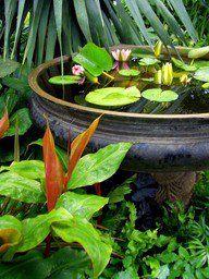 mini estanque