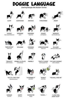 Understanding your dog.