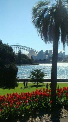 View of Harbour Bridge from Sydney Botanical Gardens.